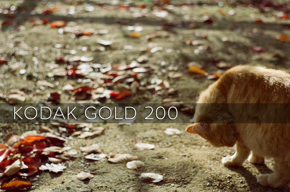 「【レビュー】35mmカラーフィルム『Kodak GOLD 200』を使ってみた」のアイキャッチ画像