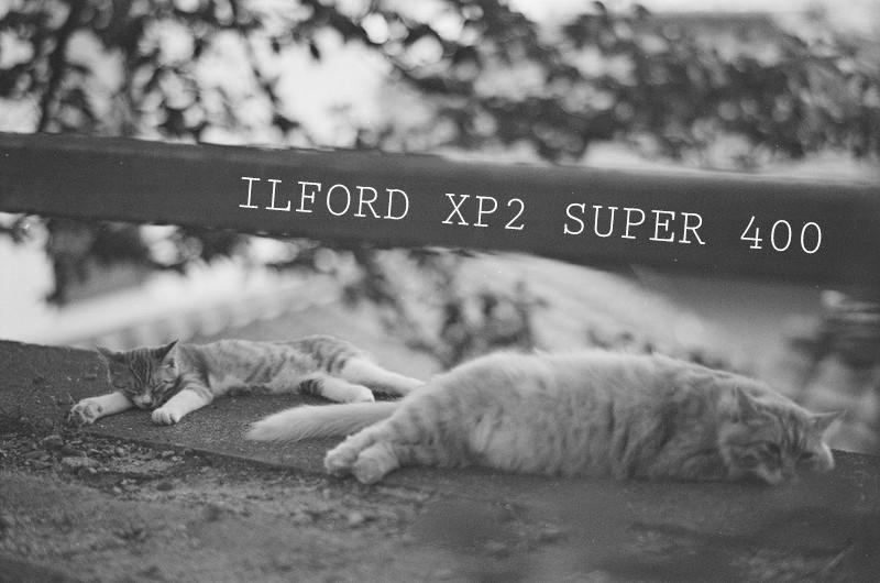 「【レビュー】白黒(モノクロ)フィルム『Ilford XP2 Super 400』」のアイキャッチ画像