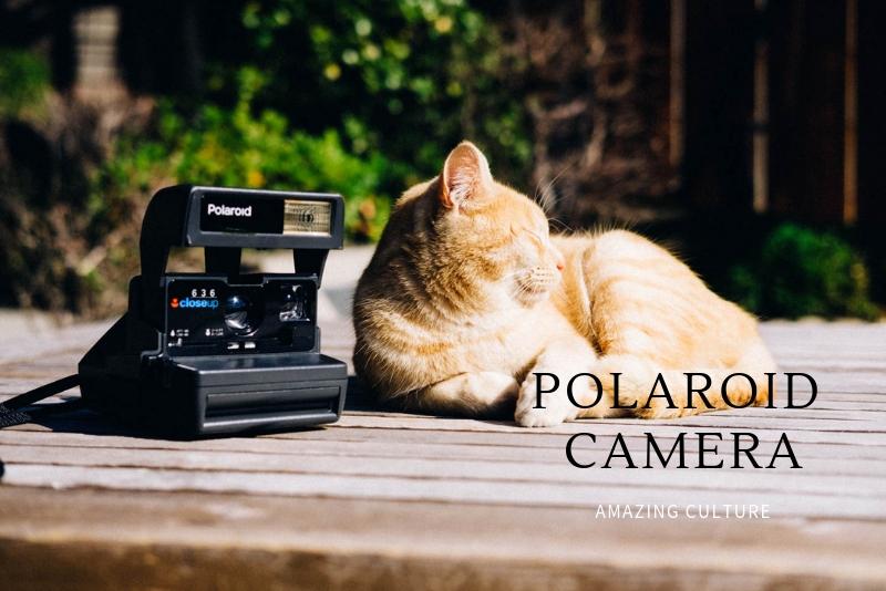 「ジャンク品のポラロイドフィルムカメラで写真を撮りました」のアイキャッチ画像